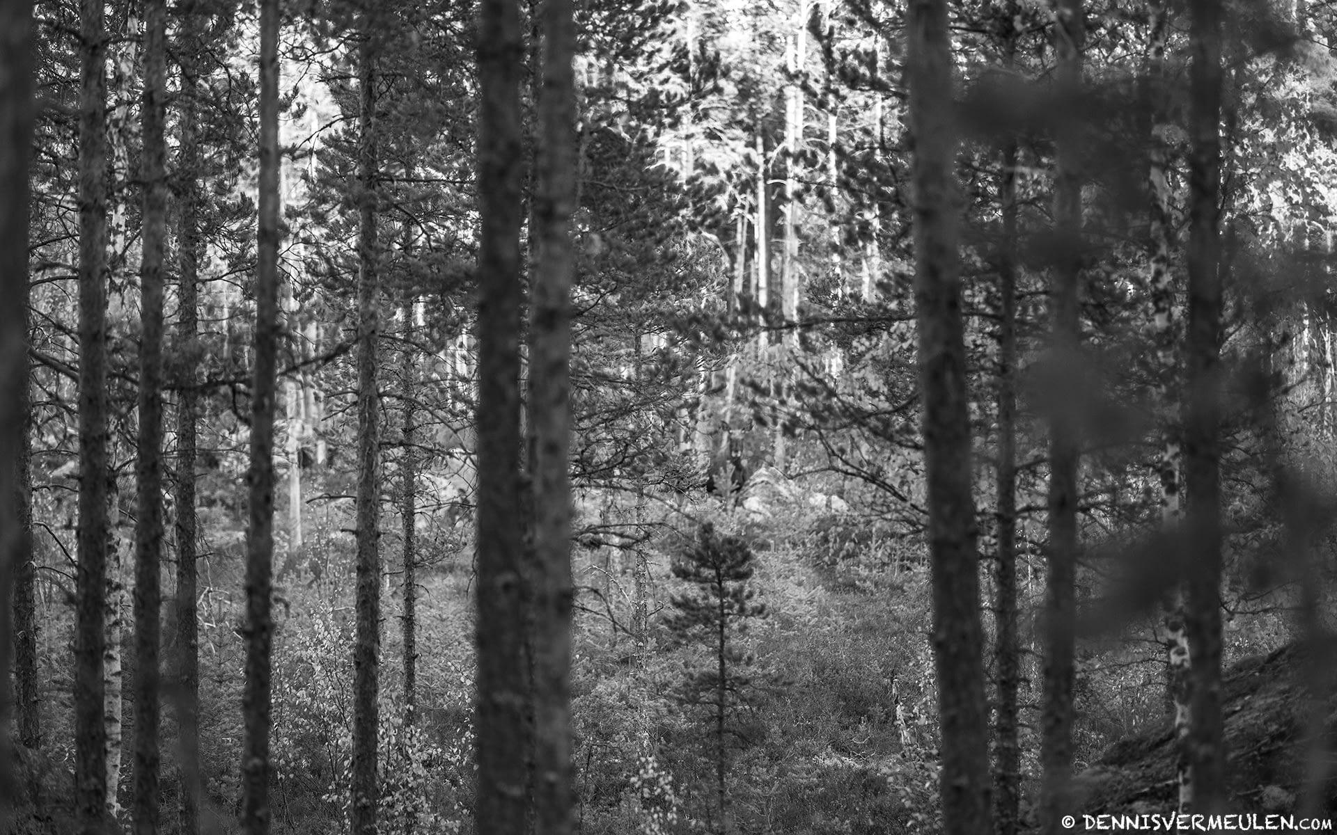 Dennis Vermeulen Photography - Natur i Forest